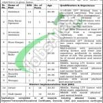 Project Management Unit Lahore Jobs