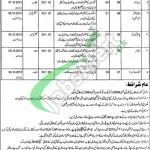 Social Welfare Department Punjab Jobs