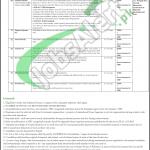 Jobs in Literacy Department Punjab