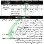 Government of Punjab Jobs