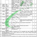 Punjab Energy Department Jobs