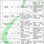 Punjab Daanish Schools and Centers of Excellence Authority Jobs