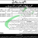 Government of Punjab Human Rights and Minorities Affairs Department Jobs