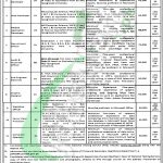 Primary and Secondary Healthcare Department Punjab Jobs