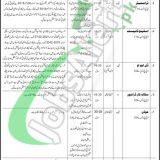 Council of Islamic Ideology Pakistan Jobs