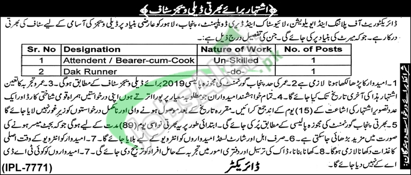 Livestock & Dairy Development Department Punjab Jobs