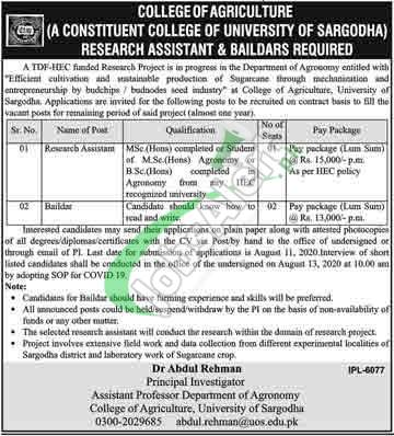 College of Agriculture University of Sargodha Jobs