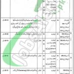 Session Court Khanewal Jobs